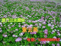 莆田仙游有賣黑麥草嗎